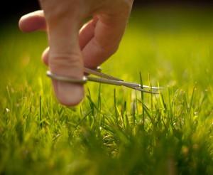 ocd lawn