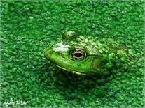131213.Arriving In Plain View.RLH.Frog