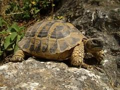 turtle-467263__180