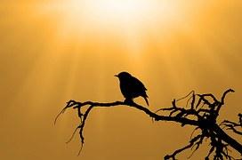 bird-313614__180