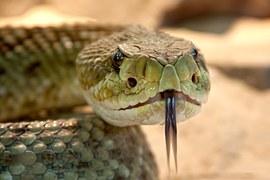 rattlesnake-653642__180