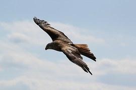 birds-217591__180
