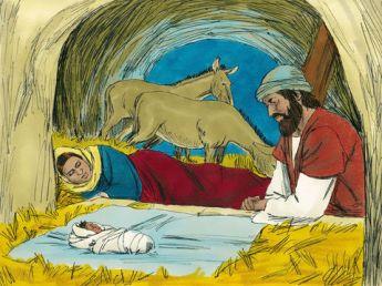 shepherd6